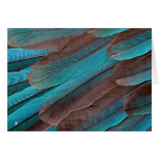 Kingfisher Wing Feathers Card