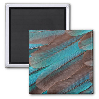 Kingfisher Wing Feathers Magnet