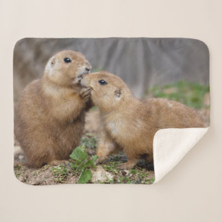 Kiss Me Quick Sherpa Blanket