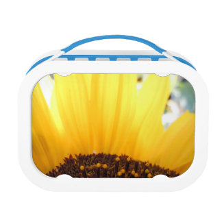 Kissed by the sun lunchboxes