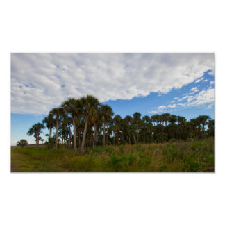 Kissimmee Prairie Hammock, Florida Poster