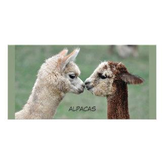 Kissing Alpacas photocard Card