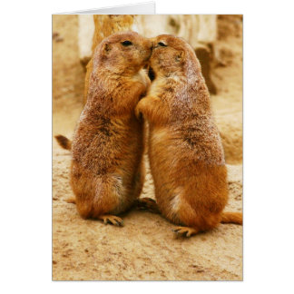 Kissing Black Tailed Prairie Dogs Card