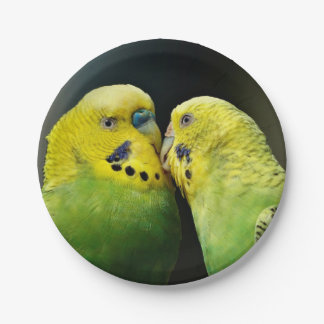 Kissing Budgie Parrot Bird 7 Inch Paper Plate