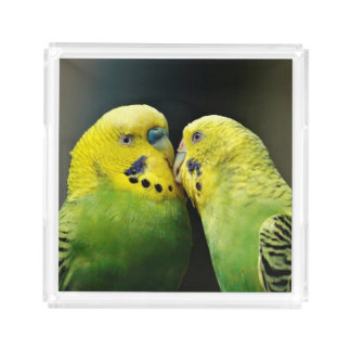 Kissing Budgie Parrot Bird Acrylic Tray