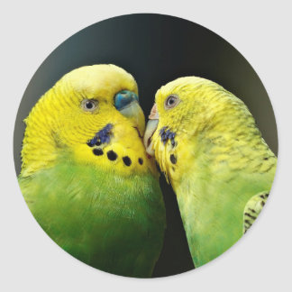Kissing Budgie Parrot Bird Classic Round Sticker