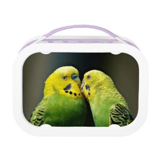 Kissing Budgie Parrot Bird Lunch Box