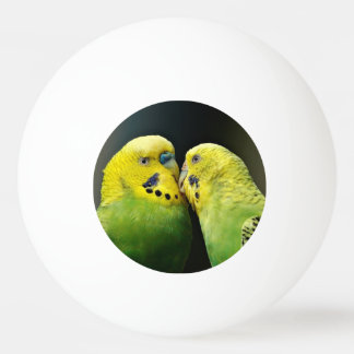 Kissing Budgie Parrot Bird Ping Pong Ball