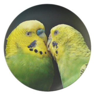 Kissing Budgie Parrot Bird Plate