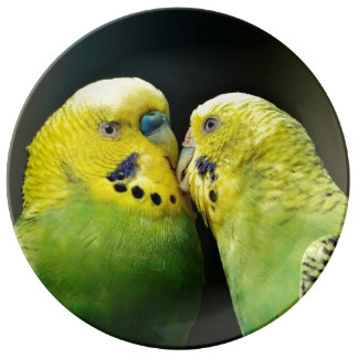 Kissing Budgie Parrot Bird Porcelain Plate