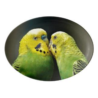 Kissing Budgie Parrot Bird Porcelain Serving Platter