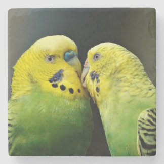 Kissing Budgie Parrot Bird Stone Coaster