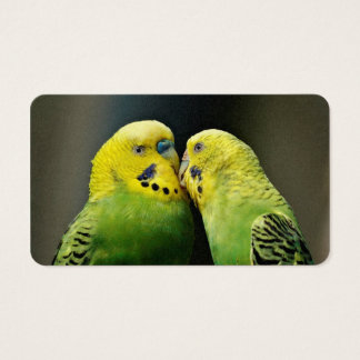 Kissing Budgie Parrot Business Card