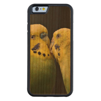 Kissing Budgie Parrot Cherry iPhone 6 Bumper Case