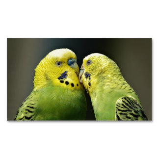Kissing Budgie Parrot Magnetic Business Card