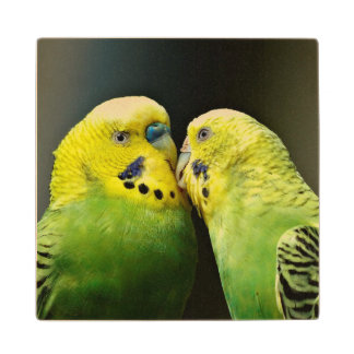 Kissing Budgie Parrot Maple Wood Coaster