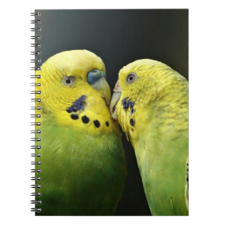 Kissing Budgie Parrot Notebooks