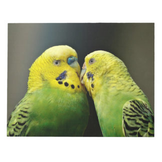 Kissing Budgie Parrot Notepad