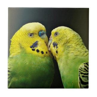 Kissing Budgie Parrot Tile