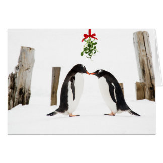 Kissing Gentoo penguins holiday card