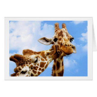 kissing Giraffes Card