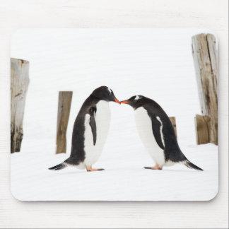 Kissing Penguins - mouse pad