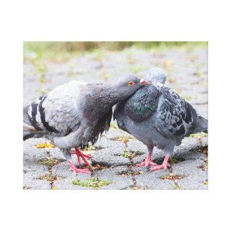 Kissing pigeons canvas print