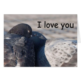 Kissing Pigeons Card
