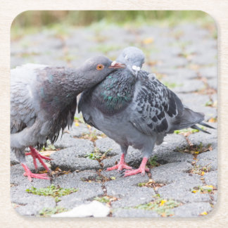 Kissing pigeons square paper coaster