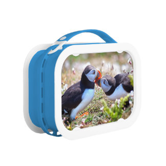 Kissing Puffins Lunch Box