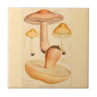 Kitchen Accent Tile Mushrooms Culinary