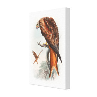 Kite Glead Hawk John Gould Birds of Great Britain Canvas Print