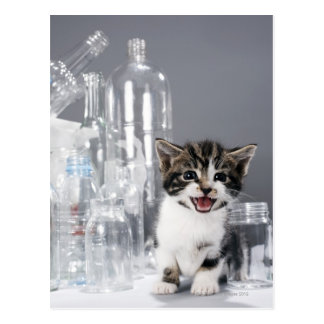 Kitten amongst recycled bottles and jars postcard