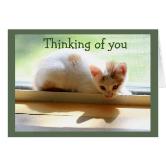 Kitten and Her Shadow in Sunny Window Card