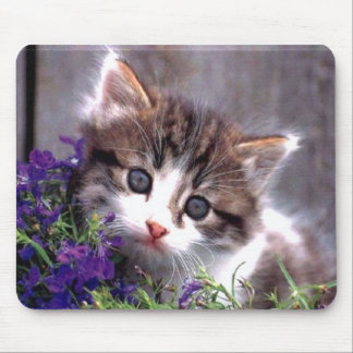 Kitten And Violets Mouse Pad