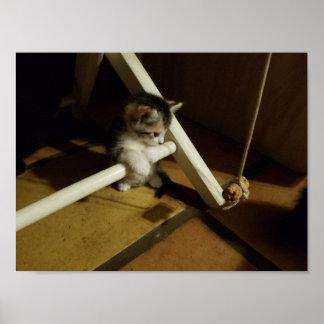 Kitten at Play #1 Poster