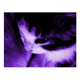 Kitten Contrast Purple Postcard