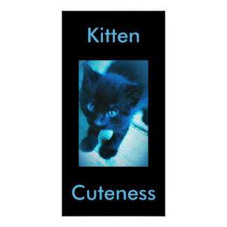 Kitten cuteness perfect poster
