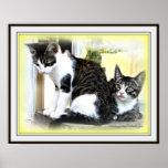 Kitten cuteness poster