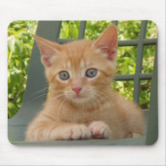 Kitten Dax Mousepad