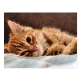 kitten design postcard