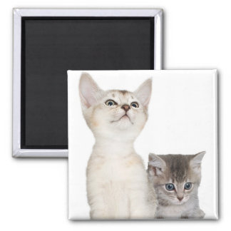 Kitten design to help make your Christmas Merry! Magnet