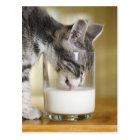 Kitten drinking milk from glass postcard