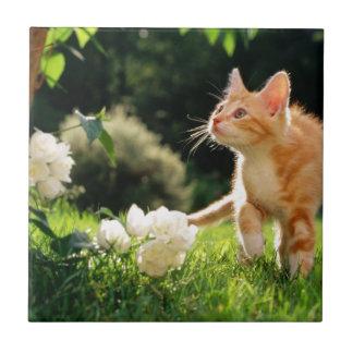 Kitten Exploring Outside by some Flowers Tile