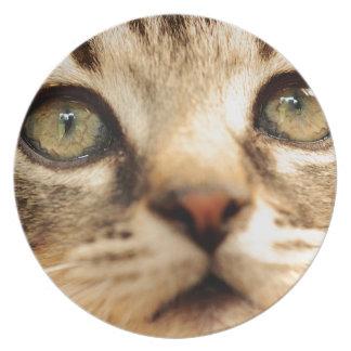 Kitten face dinner plates