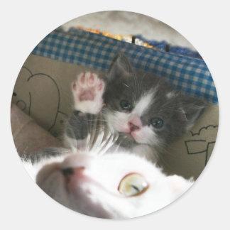 Kitten hello classic round sticker