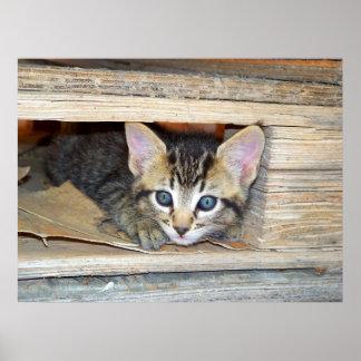 Kitten Hide and Seek Poster