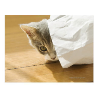 Kitten hiding in paper bag postcard