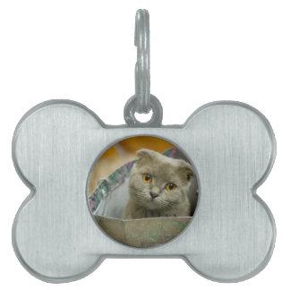 Kitten in a Bag Pet ID Tags