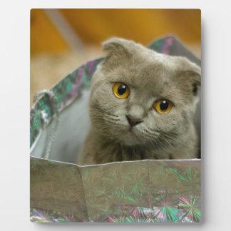 Kitten in a Bag Plaque